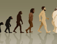 New Study Links Paleo to Weight Gain